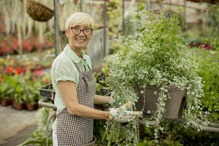 Portrait of senior woman working in greengarden Stock fotó