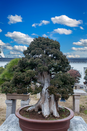 View at tree penjing in Humble Administrator's Garden in Suzhou Stock Photo