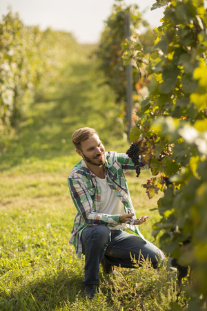 Handsome young man working in the vineyard