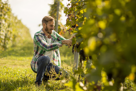 Handsome young man working in the vineyard Фото со стока - 109038977