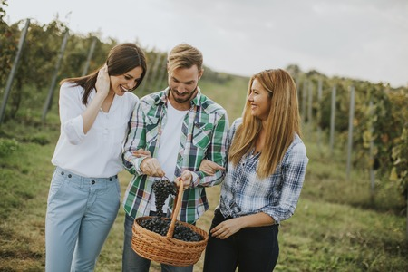 Group of young people in the vineyard after grape harvest Stock Photo
