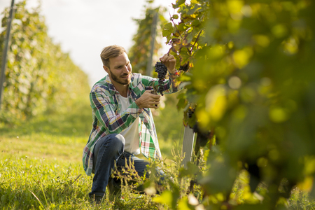 Handsome young man working in the vineyard Фото со стока - 108889203