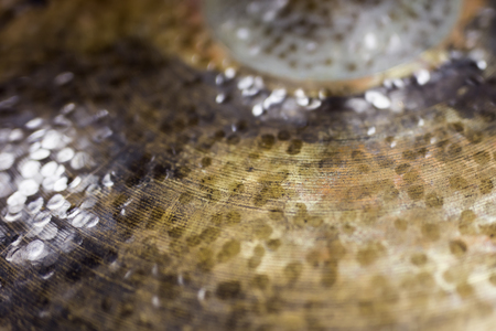 Closeup detail of the old vintage cymbal