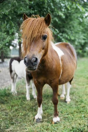 View at pony horses on the farm