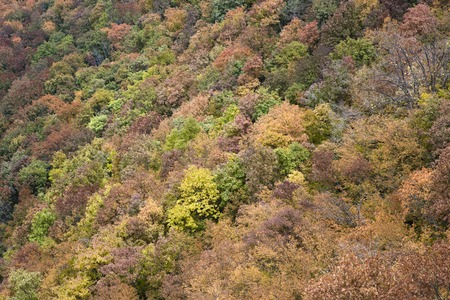 Aerial view at the colorful autumn forest Stock Photo