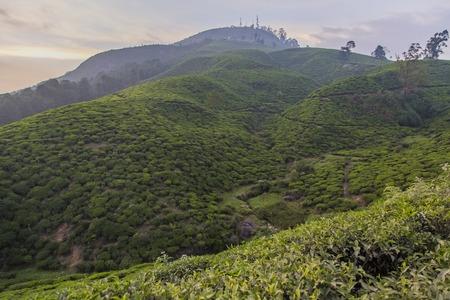View of the tea plantation at Nuwara Eliya in Sri Lanka