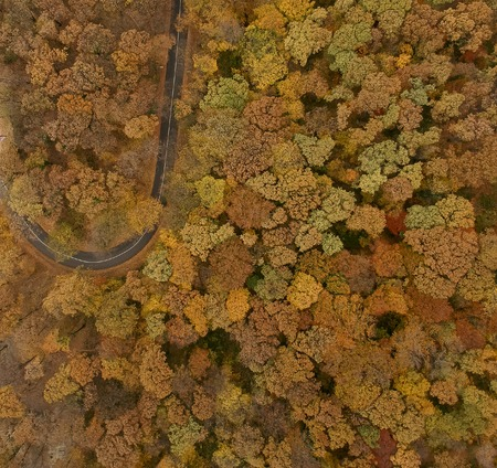 Aerial view at the road in beautiful autumn forest