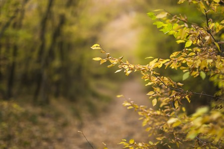Detalle del camino en el bosque de otoño Foto de archivo