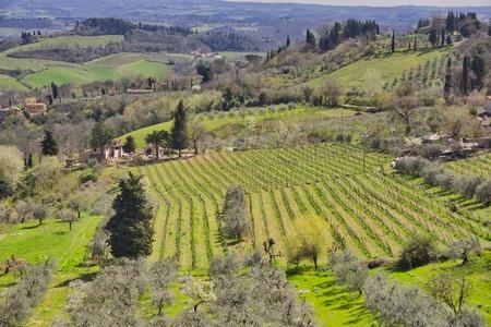 Countryside and chianti vineyards near San Gimignano inTuscany, Italy, Europe
