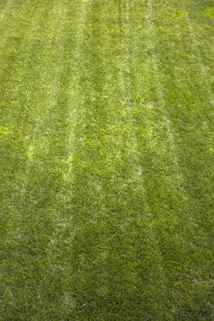 Closeup detail of the cultivated green grass Stok Fotoğraf