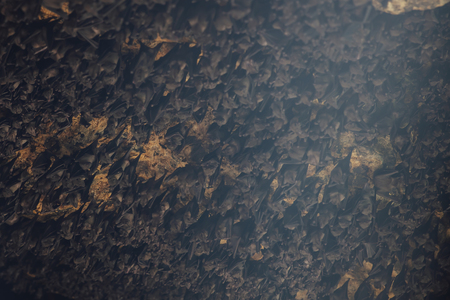 Colony of bats in the cave of Pura Goa Lawah at Bali, Indonesia Stock Photo