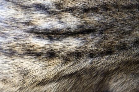 Détail de plan rapproché de la fourrure asiatique de civette de paume