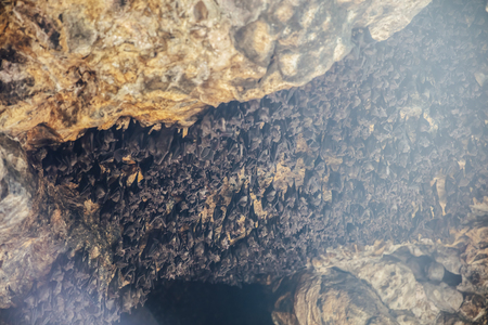 Colony of bats in the cave of Pura Goa Lawah at Bali, Indonesia