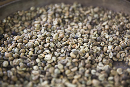 Detail of the raw Kopi Luwak coffee beans on the coffee farm Stock Photo
