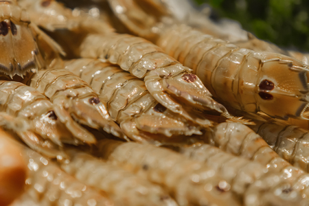 Fresh Squilla mantis (Mantis shrimp) on the fish market