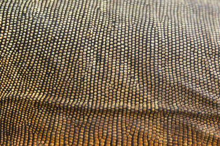 Closeup of the colorful natural skin of iguana background texture