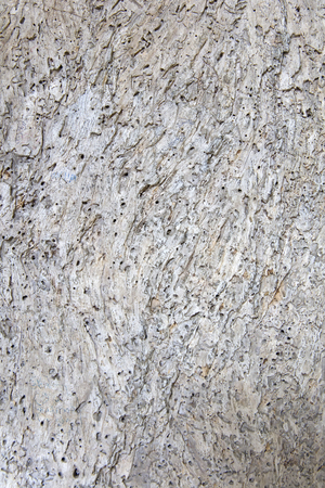 Closeup of the old gray cracked wood texture background