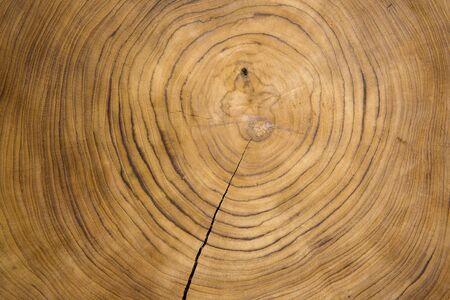 Grande pezzo circolare di sezione trasversale di legno con motivo ad anello concentrico e crepe