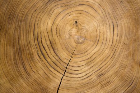 Large circular piece of wood cross section with concentric tree ring texture pattern and cracks