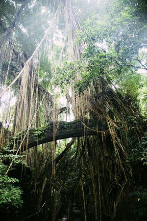 Ubud Monkey Forest sanctuary at Bali island, Indonesia