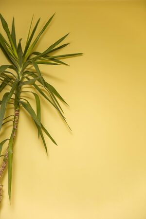 Beautiful feathery green palm on the vibrant yellow wall background with empty copy space