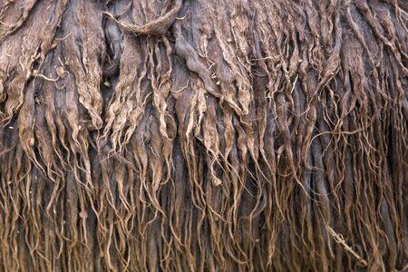 Closeup detail of the alcapa wool in Cusco, Peru