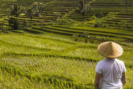 Man with traditional balinese cap at rice fields of Jatiluwih in southeast Bali, Indonesia 版權商用圖片
