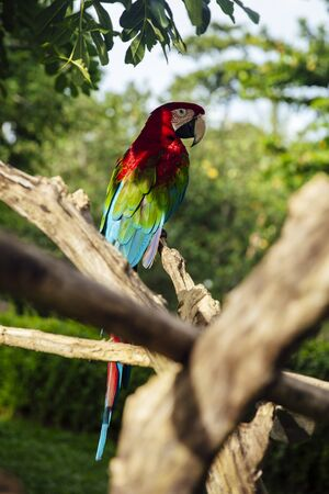 Closeup view at red and green macaw