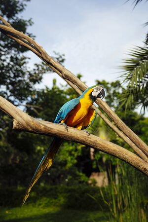 Closeup view at blue and yellow macaw