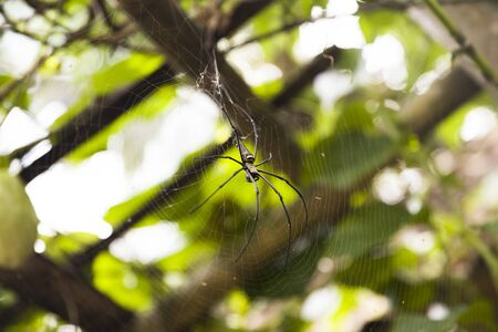 View at spider on a web in morning tropical forest