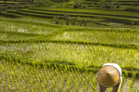 Man with traditional balinese cap at rice fields of Jatiluwih in southeast Bali, Indonesia