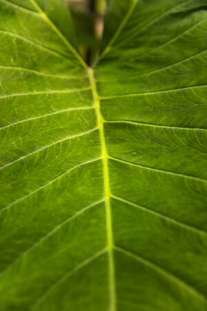 Closeup of the fresh green leaf texture