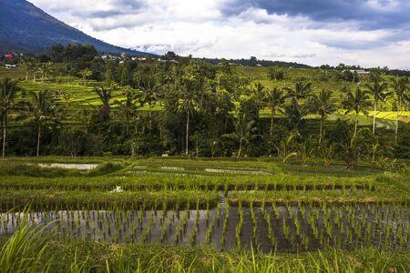 Rice fields of Jatiluwih in southeast Bali, Indonesia