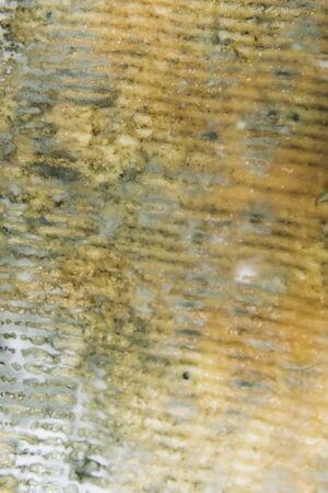 Closeup detail of the texture of Bleu dAuvergne cheese