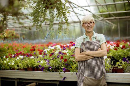 Portrait of senior woman working in flower garden