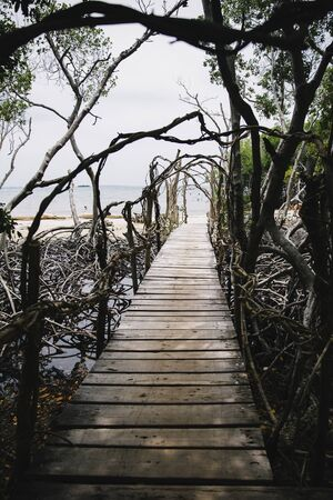 Empty wooden boardwalk at mangrove forest at Rosario island in Colombia
