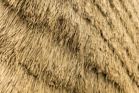Closeup of backdrop with thatched roof detail