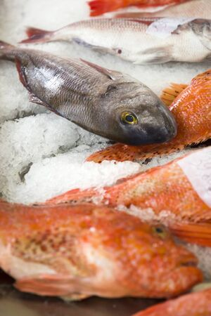 Fresh fishes on ice at local fish market in Funchal at Madeira island in Portugal