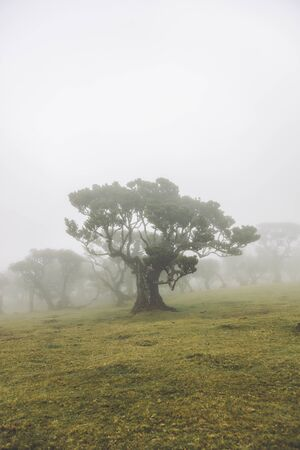 View at Mystical Fanal laurisilva forest at Madeira island, Portugal