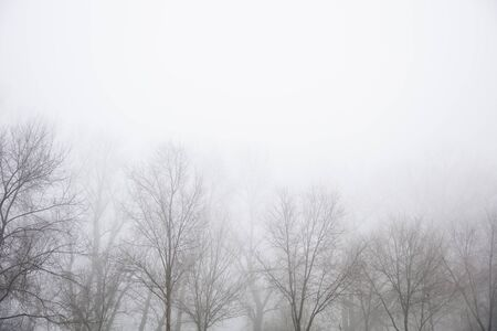 View at trees in the foggy winter day Imagens