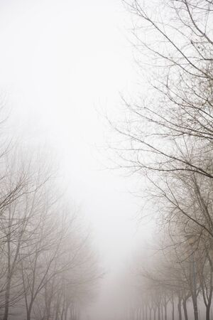 View at trees in the foggy winter day 写真素材