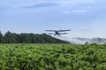 Agricultural airplane is flying under the sunflowers field and spraying water Honestly, it is not clear water, it is diluted fertilizers. Biplane is flying close to the ground. Green trees and blue sky are on the background and green sunflowers are on the Stock Photo