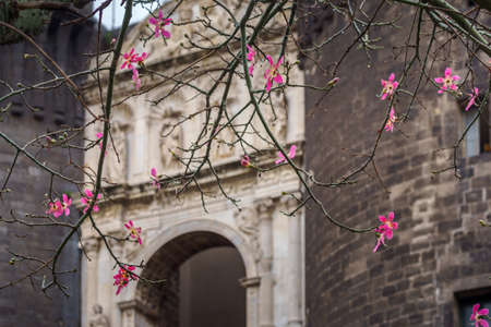 The medieval castle of Maschio Angioino or Castel Nuovo New Castle and the silk tree in bloom, Napoli