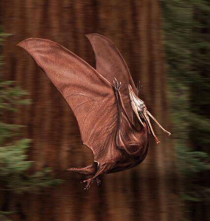 pterodactyl: Pterodactyl      Stock Photo