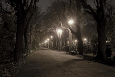 Park alley by night Standard-Bild