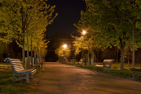 Park alley by night photo