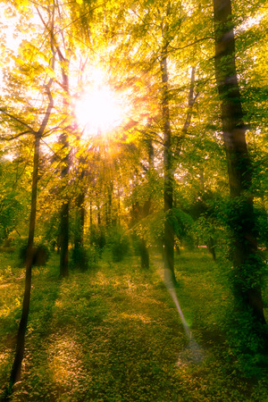 Sun shines through the tree leaves in autumn