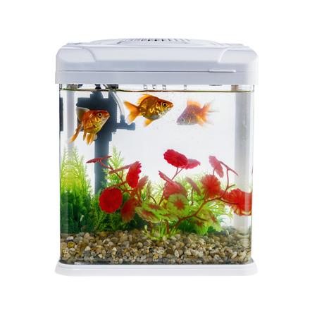 Goldfish in a daylight water tank (aquarium) 免版税图像