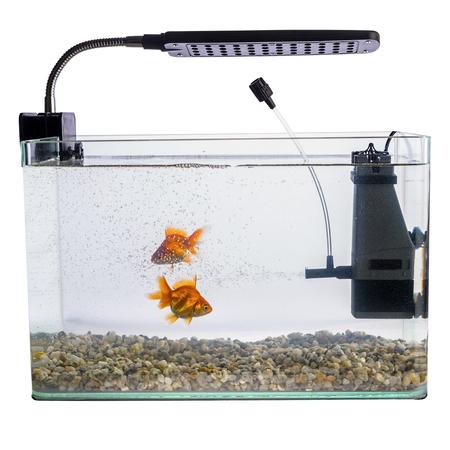 Goldfish in a daylight water tank (aquarium) Standard-Bild
