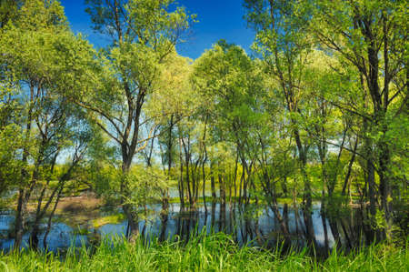 background with trees in the swamp near narew river, poland photo